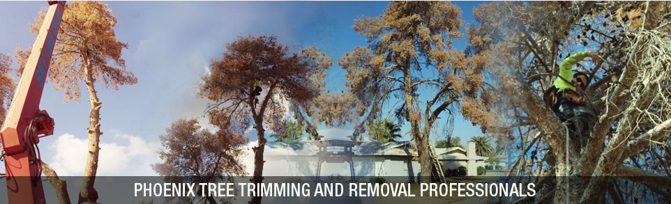 AZ Tree Trimming and Removal Experts