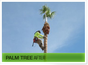 AZtree Trimming