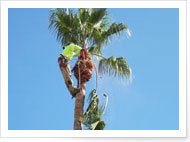 AZtree Triming and Removal Experts