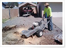 AZ Stump Grinding Pictures